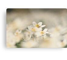 A sea of white, a wood anemone at Downton Abbey Metal Print