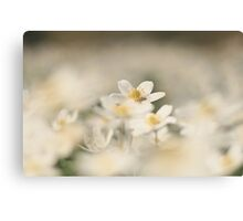 A sea of white, a wood anemone at Downton Abbey Canvas Print