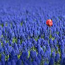 Red intruder by Javimage