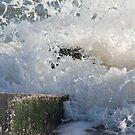 splash! by Perggals© - Stacey Turner