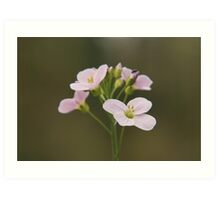 A Cuckoo flower in bloom at Downton Abbey Art Print