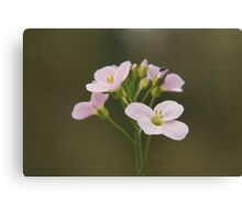 A Cuckoo flower in bloom at Downton Abbey Canvas Print