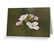 A Cuckoo flower in bloom at Downton Abbey Greeting Card