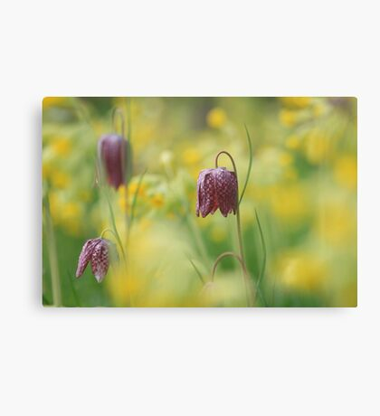 Meadow in bloom at Downton Abbey Canvas Print