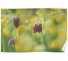 Meadow in bloom at Downton Abbey Poster