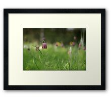 Standing alone, snakes head fritillary at Downton Abbey Framed Print