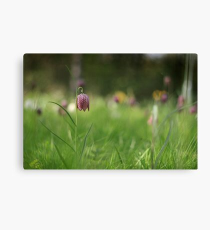 Standing alone, snakes head fritillary at Downton Abbey Canvas Print