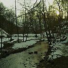 Icy Twilight Grove by damianaashe