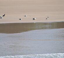 Orient Beach Birds on the Beach by Eldon Mason