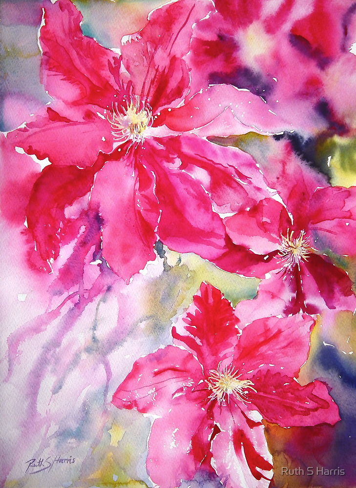 Clematis Jewels by Ruth S Harris