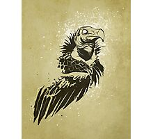 Lappet-faced vulture Photographic Print