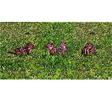 Baby Chipmunks First Day Collage Photographic Print