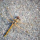 Yellow Dragonfly on the Sidewalk by lindsycarranza