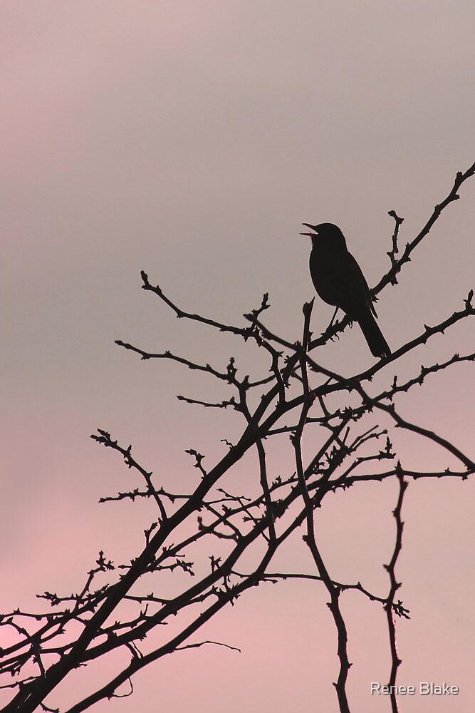Sunset Song ~ by Renee Blake