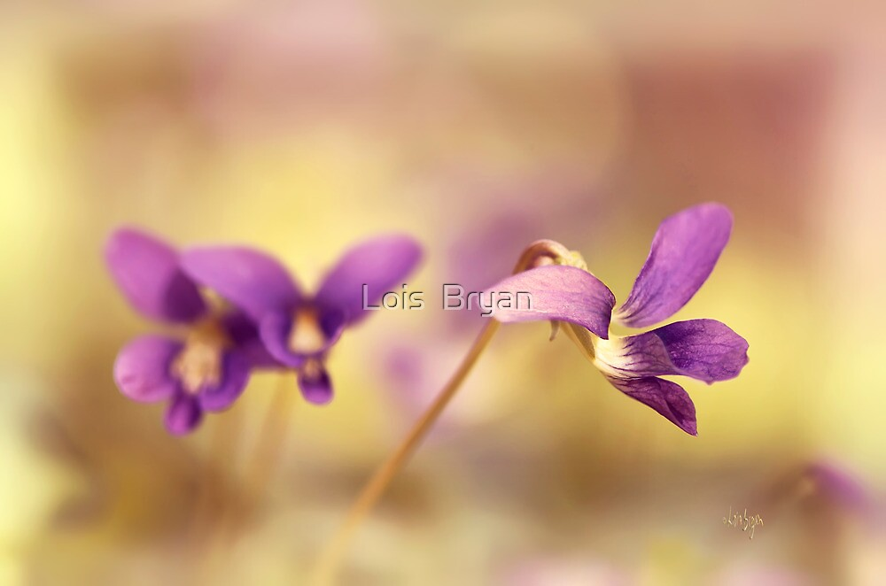 The Secret World of Wild Violets by Lois  Bryan