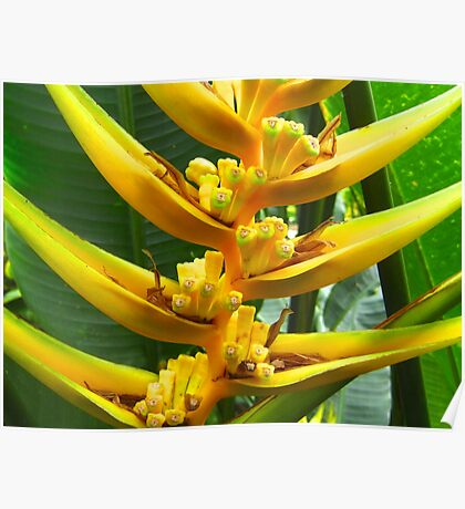 Yellow Flowering Plant Poster