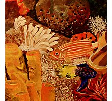 Colorful Reef Fish  Photographic Print