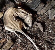 12.5.2013: Mummified Rat by Petri Volanen