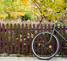 bicycle and fence, circle and square by pellinni