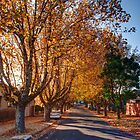 Tree lined street in autumn by Joel Bramley