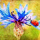 Ladybird by Ian Jeffrey