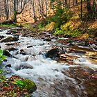 mountain river the forest by pellinni