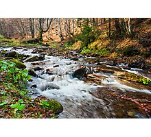 mountain river the forest Photographic Print