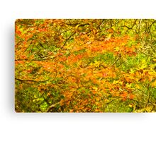 Autumn in Launceston 2013 Canvas Print