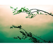 Very Zen Photographic Print