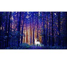 Harry's Patronus - White Stag in a Magical Forest Photographic Print