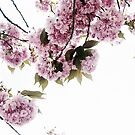 Bloom by Zen-Art (Zenith)
