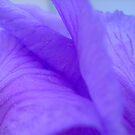 Delicate flower petals by Ana Belaj