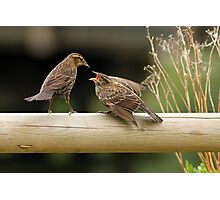 Lunch on a Fence Post Photographic Print
