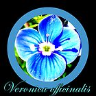 Veronica officinalis by The Creative Minds