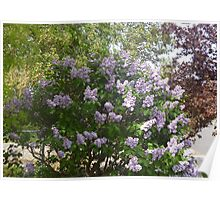 nature colored glory  Poster