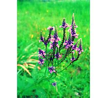 happiness grows Photographic Print