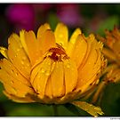 yellow flower by kippis