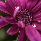 Senetti Water Droplet by Andrew Pounder