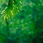 go green by Siju Doniston