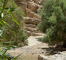 Trees At The Oasis by Michael Redbourn