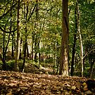 Autumn Woodland Walk, Sedbergh by Mark Battista