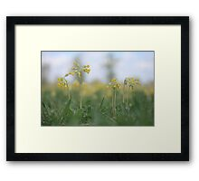 An emergence of cowslip at Downton Abbey Framed Print