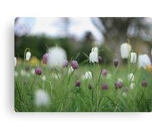 Wildflowers emerge at Downton Abbey Canvas Print