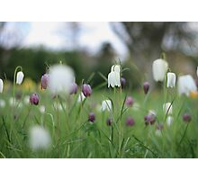 Wildflowers emerge at Downton Abbey Photographic Print