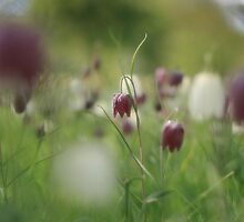 Meadow at Downton Abbey by miradorpictures