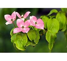 Soft Pink Flowers of the Deep Woods Photographic Print