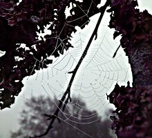 the web by Jenyvive