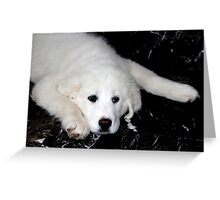 Mother's Day Gift - Pyrenees Mountain Dog Puppy Greeting Card