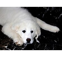 Mother's Day Gift - Pyrenees Mountain Dog Puppy Photographic Print
