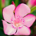 Purple Flower by RichardPhoto